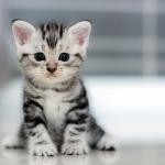 Болячки и болезни, которые лечут коты